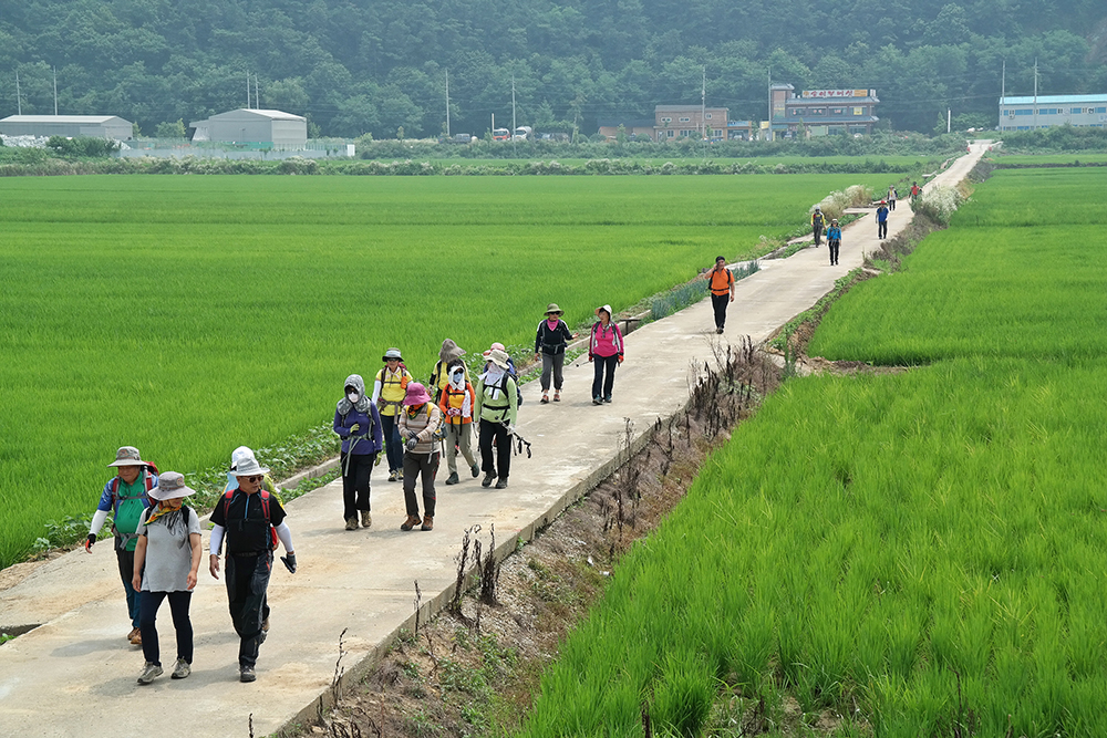 삼남길을 도보하고 있는 탐방객들