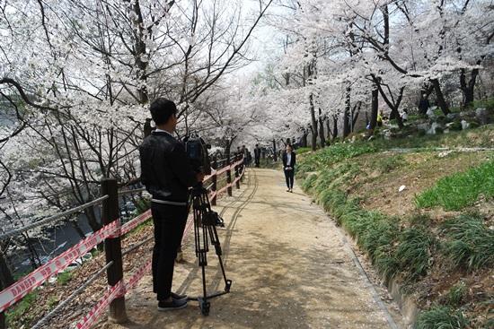 벚꽃축제를 취재하는 경기방송, 벚꽃과 함께 추억을 남기는 포토존